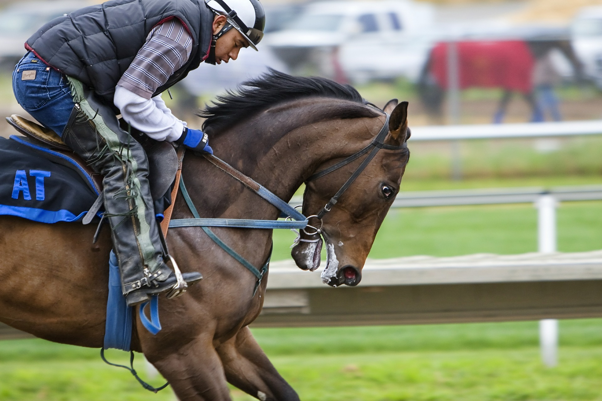 racehorse-419742_1920.jpg