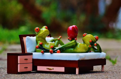 frog-1073356_1280.jpg